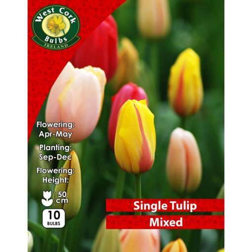 Tulips Single Mixed 10 Bulbs | MIXTPP | Spring Bulbs Delivered
